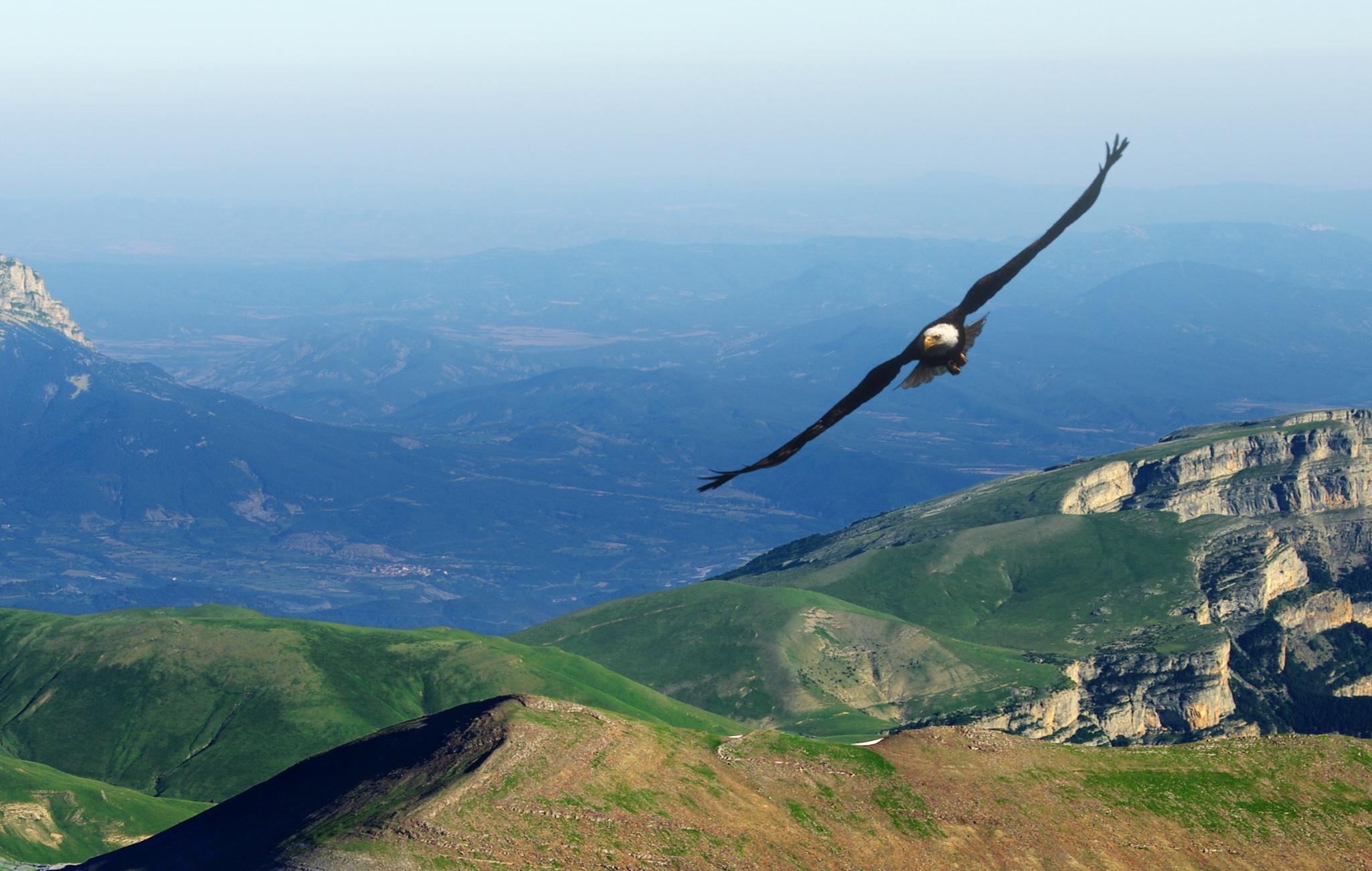 An eagle flying over mountains